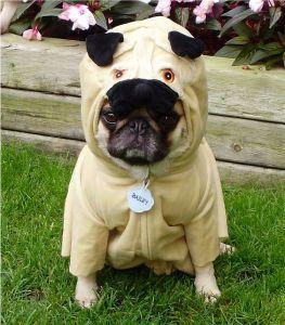 Double Agent Pug