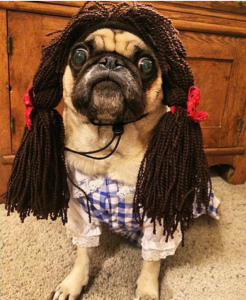 Whoopie Dorothy Pug
