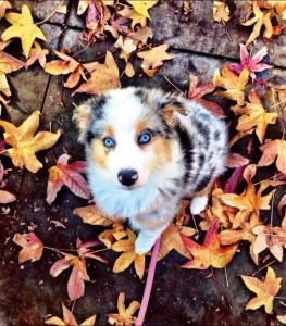 Puppy on a afternoon fall walk