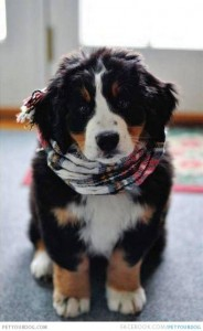 Puppy ready for winter