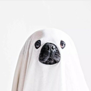 Ghost Pug