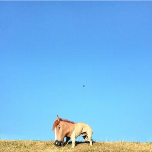 Horse Head Pug