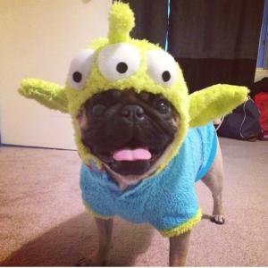 Little Green Man Pug