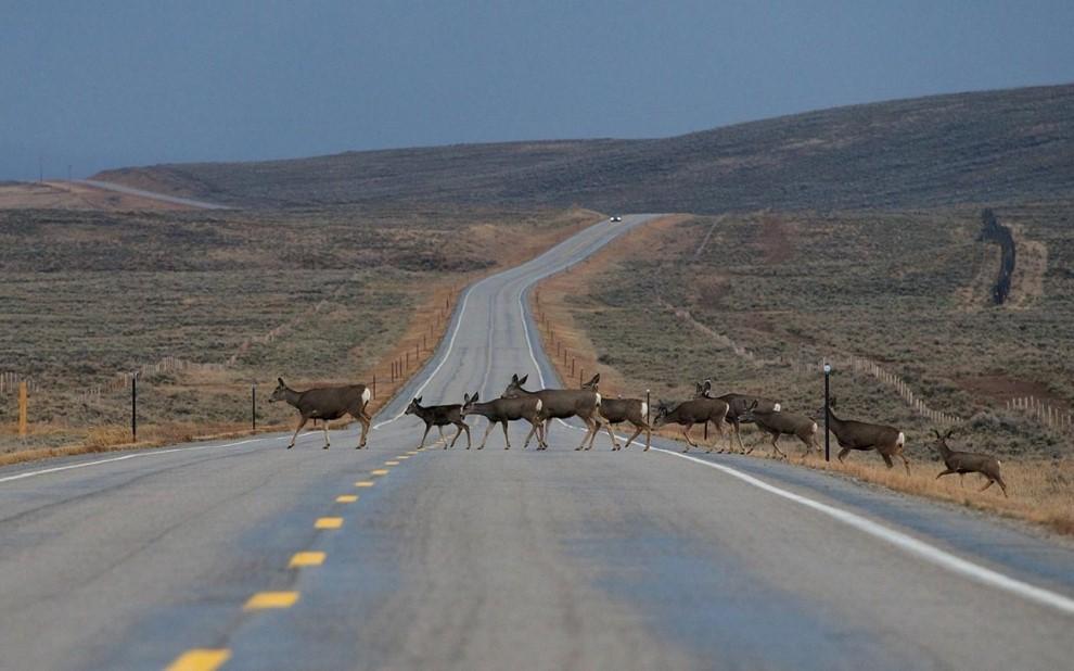 deers3